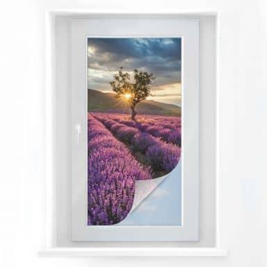 Sichtschutzfolie Lavendelblüte in der Provence -