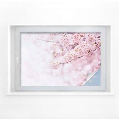 Pellicola per vetri - Fiori di ciliegio