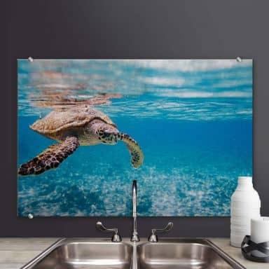 Spritzschutz Schildkröte auf Reisen