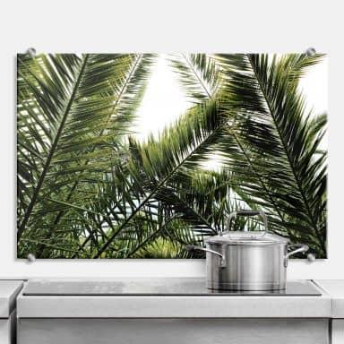 Splashback Palm Trees