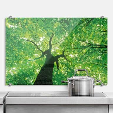 Under the Trees - Kitchen Splashback