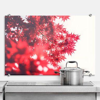 Küchenrückwand Ahornbaum im Herbst