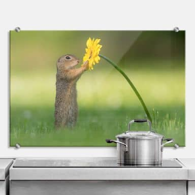 Splashback Dick van Duijn - Squirrel holding flower