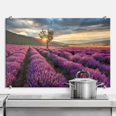 Lavender Flowers in Provence - Kitchen Splashback