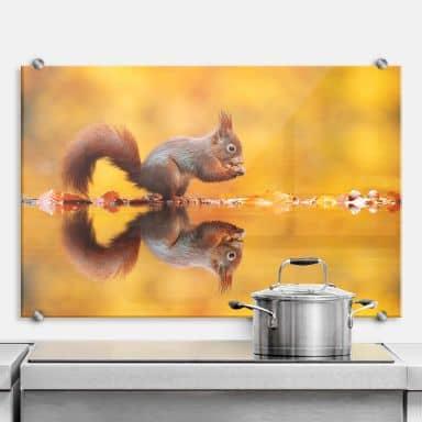 Spritzschutz van Duijn - Eichhörnchen mit Nuss