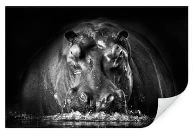 Wallprint Golob - Prustendes Nilpferd