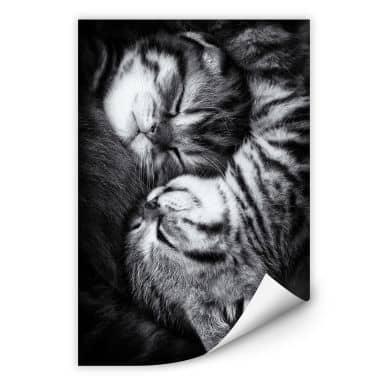 Wallprint Jancova - Sweet Kitten