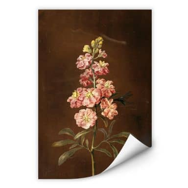 Wall print W - Dietzsch - A pink garden Levkkoje