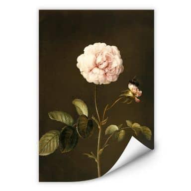 Wall print W - Dietzsch - Rosa gallica with Bumblebee