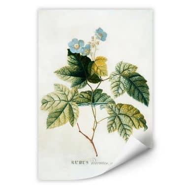 Wallprint W - Ehret - Rubus