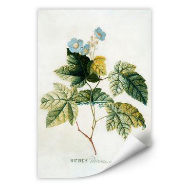 Wall print W - Ehret - Rubus