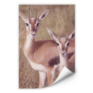 Wall print Springboks