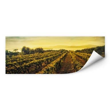 Wall print W - Vine in the sunset - Panorama