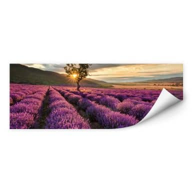 Wallprint W - Lavendelblüte in der Provence - Panorama 01
