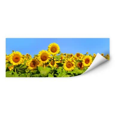 Wall print W - Sunflower Field - Panorama
