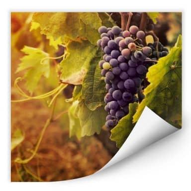 Wallprint W - Toskanische Weinrebe