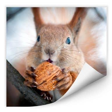 Wall print W - Squirrel with Nut - quadratic