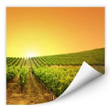 Wallprint Sonnenuntergang im Weinberg