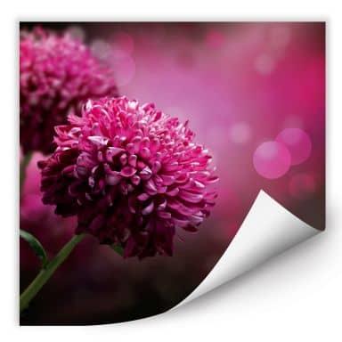 Wallprint W - Pink Dahlia