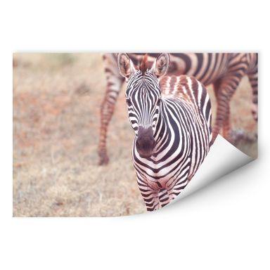 Wallprint W - Zebra Fohlen