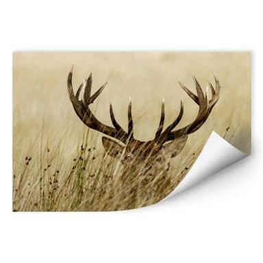 Wall print W - Attentive deer