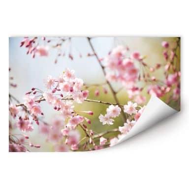 Wallprint W - Cherry Blossoms