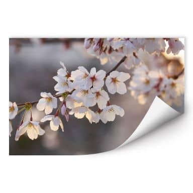 Wall print Cherry blossom branch
