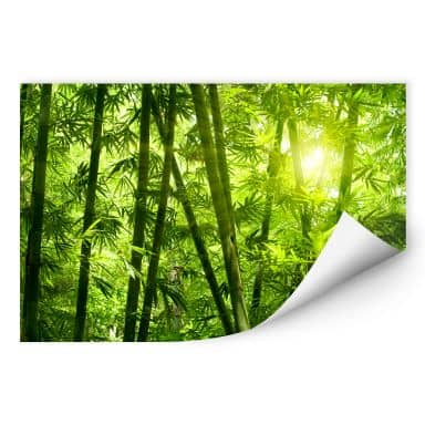 Wallprint W - Sonnenschein im Bambuswald