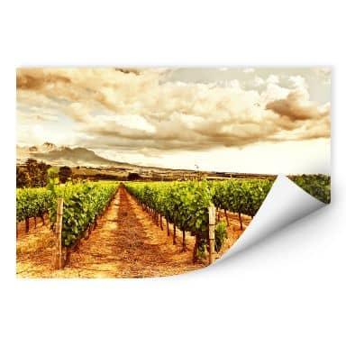 Zelfklevende Poster - Wijngaard
