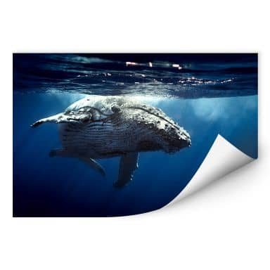 Wall print W - Dive of a Humpback Whale