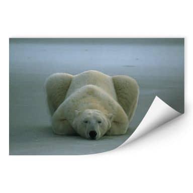 Wallprint W - NG Eisbär schlafend