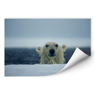 Wall print W - NG Cheeky Polar Bear