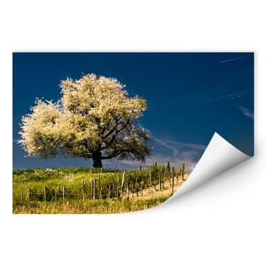 Wallprint W - Blütenpracht im April