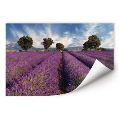 Wallprint W - Lavendelfeld