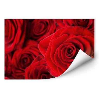 Wallprint W - Rose