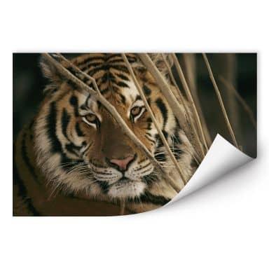 Wall print W - NG Tiger