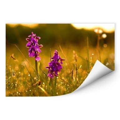 Wallprint W - Blumen im Morgentau