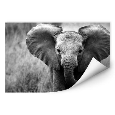 Wallprint W - Jumbo der kleine Elefant