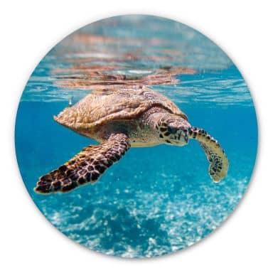 Alu-Dibond Eine Schildkröte auf Reisen - Rund