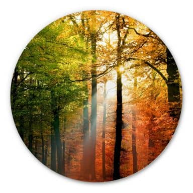Alu-Dibond - Golden Autumn - Round
