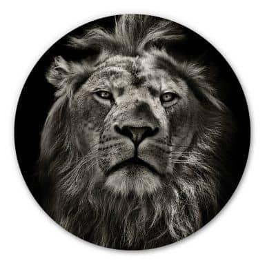 Alu-Dibond Lion - Rund