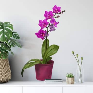 Wall sticker Orchid in pot
