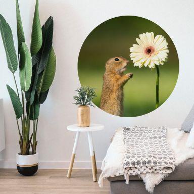 Wall sticker Dick van Duijn - Squirrel with Gerbera - round