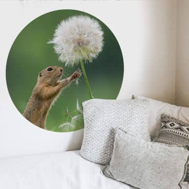 Wall sticker Dick van Duijn - Squirrel with dandelion - round