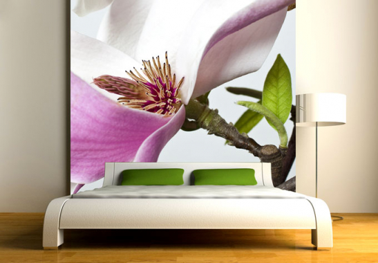 fototapete magnolie von k l wall art wall. Black Bedroom Furniture Sets. Home Design Ideas