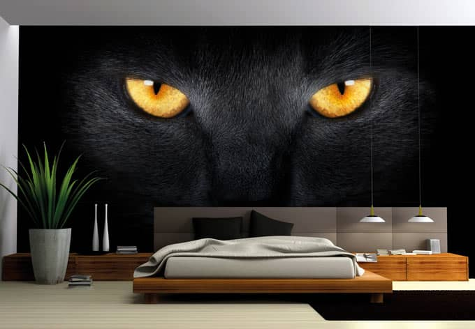 fototapete katzenaugen von k l wall art wall. Black Bedroom Furniture Sets. Home Design Ideas