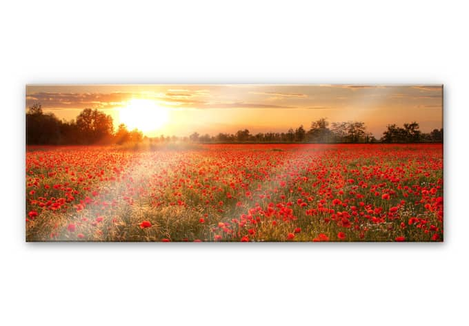 acrylglasbild mohnblumen im sonnenuntergang panorama. Black Bedroom Furniture Sets. Home Design Ideas