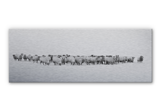 herd of sheep aluminium print wall. Black Bedroom Furniture Sets. Home Design Ideas