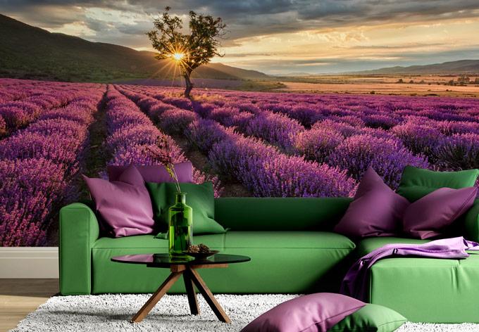 Fotobehang Lavendel in de Provence - wall-art.nl