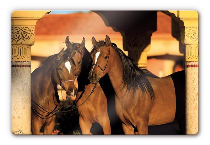 boiselle noble arabian thoroughbred mares wall. Black Bedroom Furniture Sets. Home Design Ideas